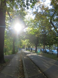 Morning bike ride through Parc Lafontaine, October 2013